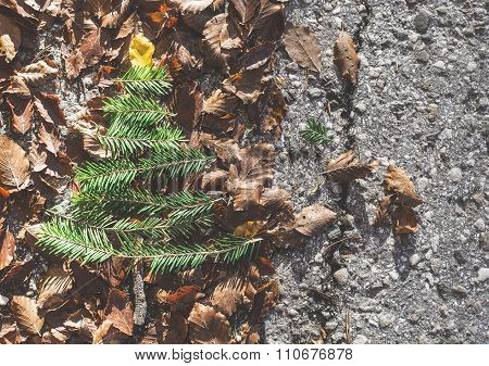 Pine Tree And Autumn Leaves