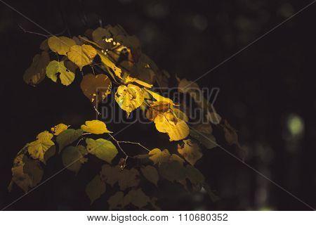 Tree Branch Under Sunbeam