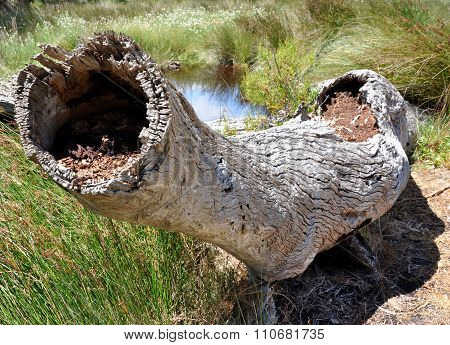 Fallen Tree In Swampy Wetland