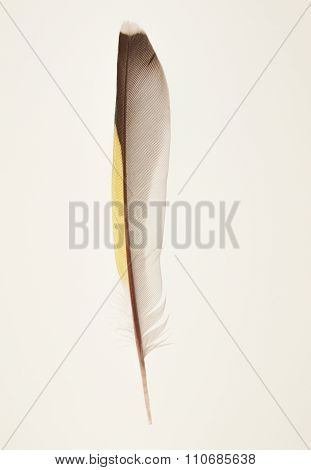 Siskin Bird Feather