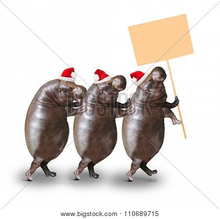 Three happy hippos going to christmas party with empty schedule. Christmas or New Year greeting.
