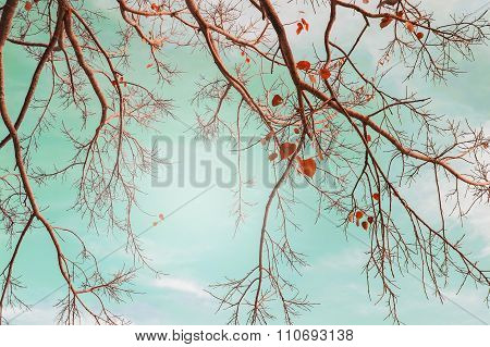 Autumn Trees Leaves In Vintage Color