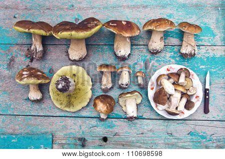 Collection Of Boletus Edulis