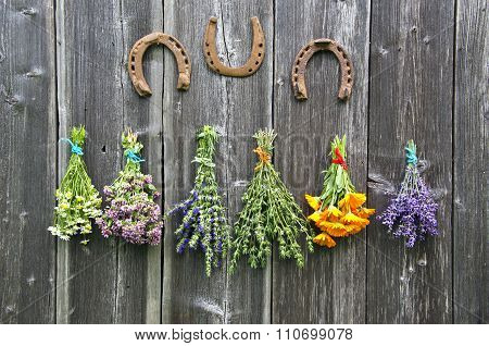 Bundles  Medical Herbs And Horseshoes Hanging On Wooden Wall