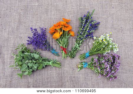 Bundle Of Freshly Picked Medical Herbs Placed On Linen Background