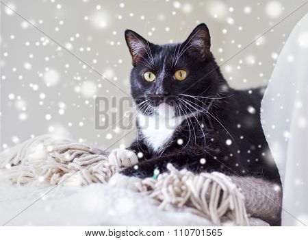 pets, domestic animals and comfort concept - black and white cat lying on plaid at home over snow effect