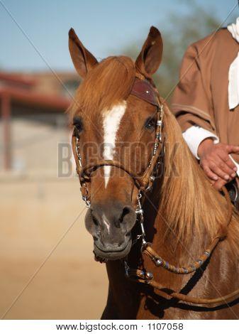 Horse Show 14
