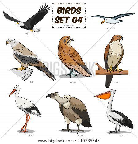 Bird set cartoon colorful vector illustration
