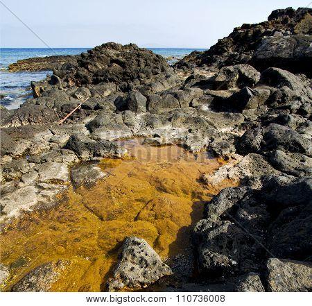 In Lanzarote Coastline  Froth  Spain Pond  Rock Stone
