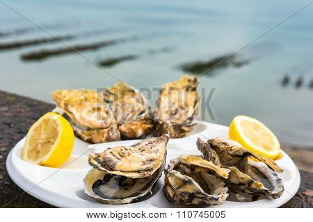 A Dozen Oysters On A Plastic Plate