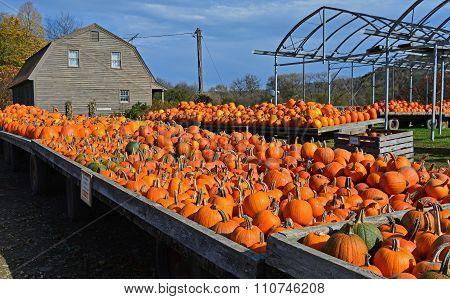 After the Harvest at a Pumpkin Farm