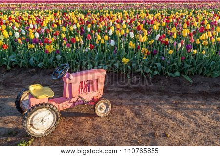 Toy Tractor With Tulips