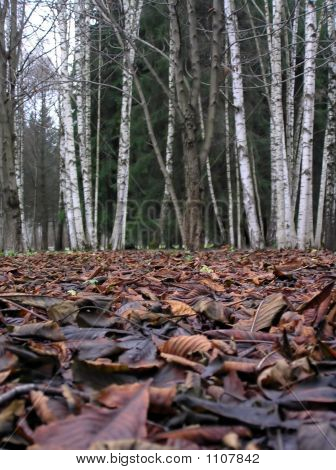 Leafs an forest