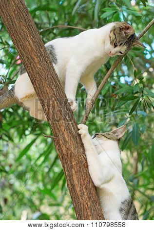 Two Cats Climbing On The Tree.