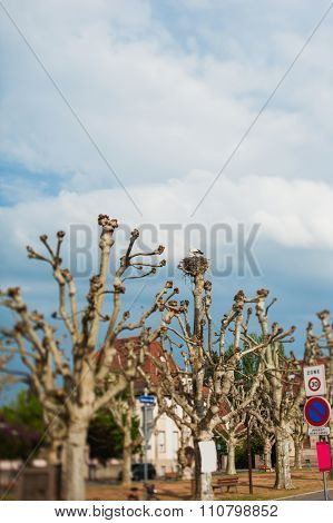 Stork In Tree Nest