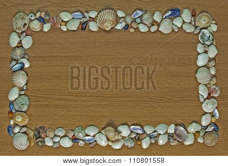 Shells And More Seashells - Background With Text Space.