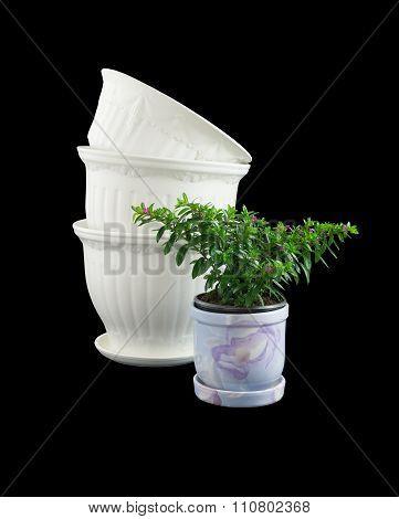 Ornamentals Flowerpots