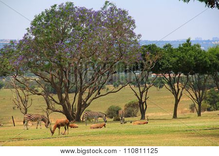 Animals at the Lion Park, South Africa