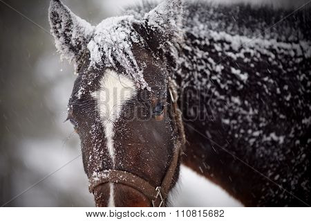 Wet Sad Brown Horse In Snow.