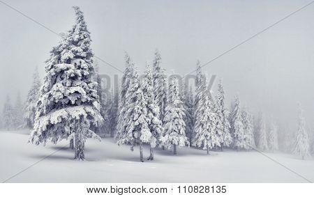 Majestic winter landscape. Dramatic wintry scene. Location Carpathian, Ukraine, Europe. Beauty world. Instagram toning effect. Happy New Year!