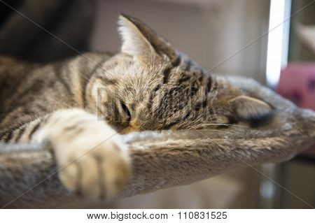 Cat Sleeping On The Platform In The House
