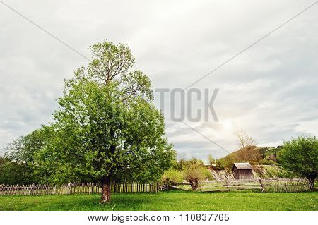 Lonely Tree In The Mountains With Wooden House And Fence