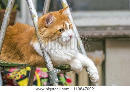Cat On Stepladder