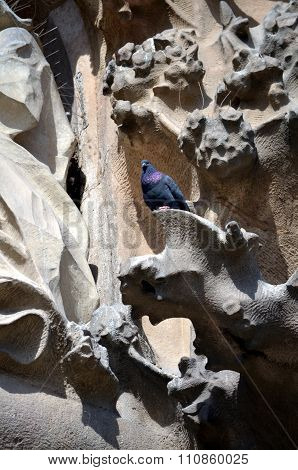 Pigeon Architectural Details Of Sagrada Familia. Barcelona Catalonia Spain