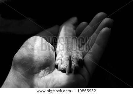 Little dogs' paw in human hand