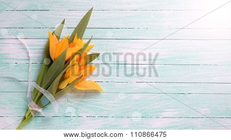 Fresh  Spring Yellow Tulips Flowers  On Turquoise  Painted Wooden Background.