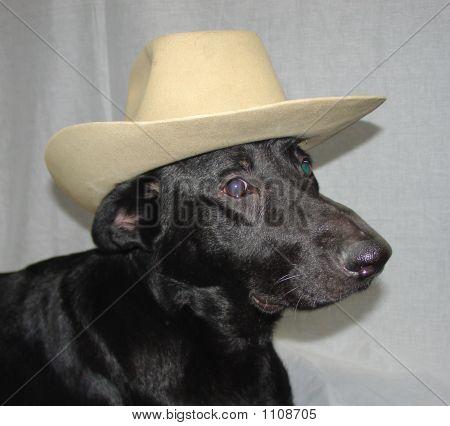 Funny Dog In Cowboy Hat