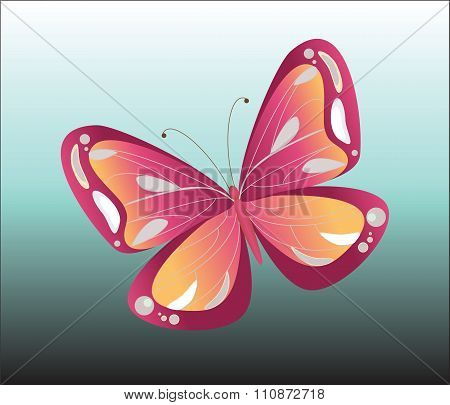 Colorful isolated butterfly