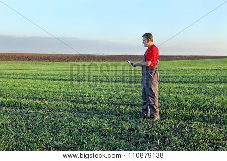 Agriculture, Farmer Examine Wheat Field Using Tablet