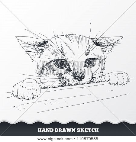 Hand drawn cat face. Sketched playful kitten muzzle look out from the desk. Pet neb symbol. Vector