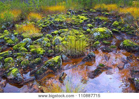 Mountain Swamp In Inari.