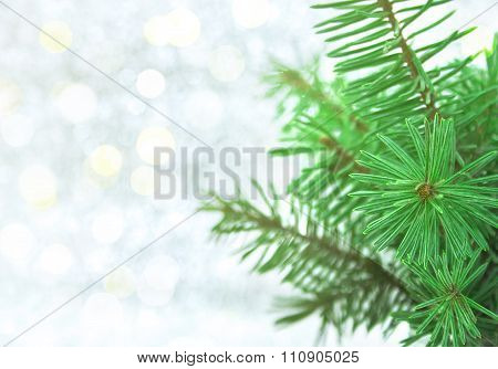Christmas Green Tree On Shiny Background With Copy Space For Text. Christmas Background Or Greeting