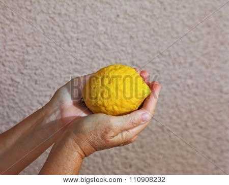 Citron -  etrog - an important ritual fruit for religious Jewish holiday of Sukkot. Woman's hands holding citrus fruit