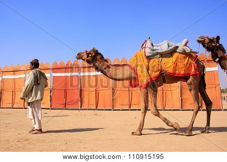 Jaisalmer, India - February 16: Unidentified Man Walks With Camels During Desert Festival On Februar