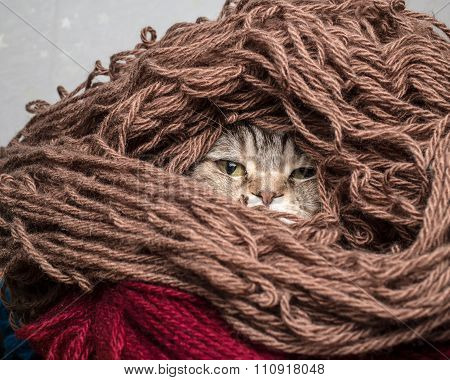 Cat In A Pile Thread Woolen Yarn