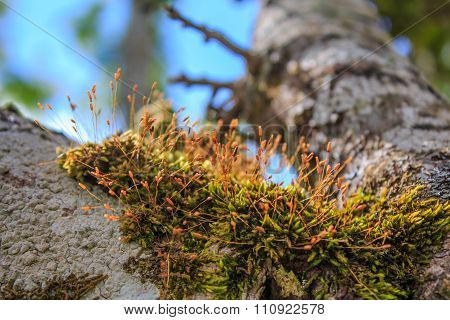Fern Plant Growing On Old Tree Stump In Garden.