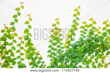 vy leaves on a white background