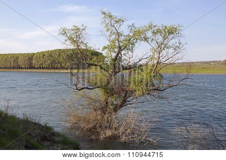 tree grows in the water