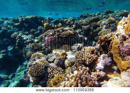 Red Sea Underwater Coral Reef