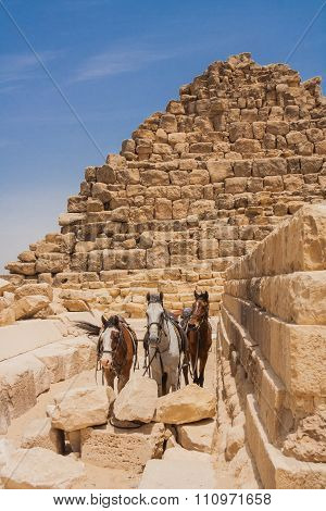 Three hourses in Giza