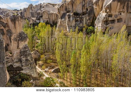 Young trees growing in Cappadocia, Turkey.