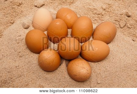 Ten Egges In Sand