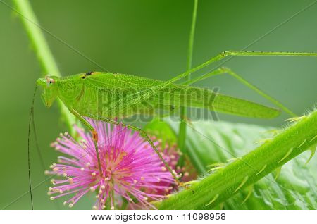 green katydid and pink flower in the parks