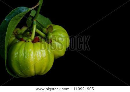 Close Up Fresh Garcinia Cambogia Over Black Background