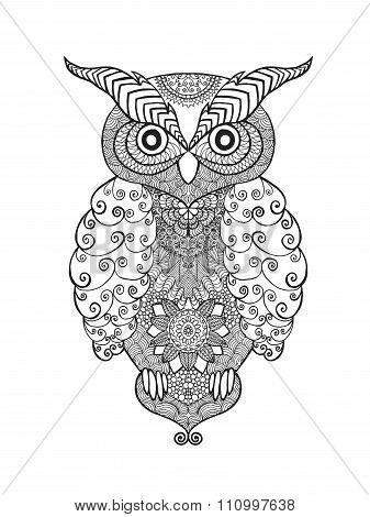 Owl bird.