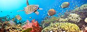stock photo of undersea  - Underwater panorama with turtle coral reef and fishes - JPG